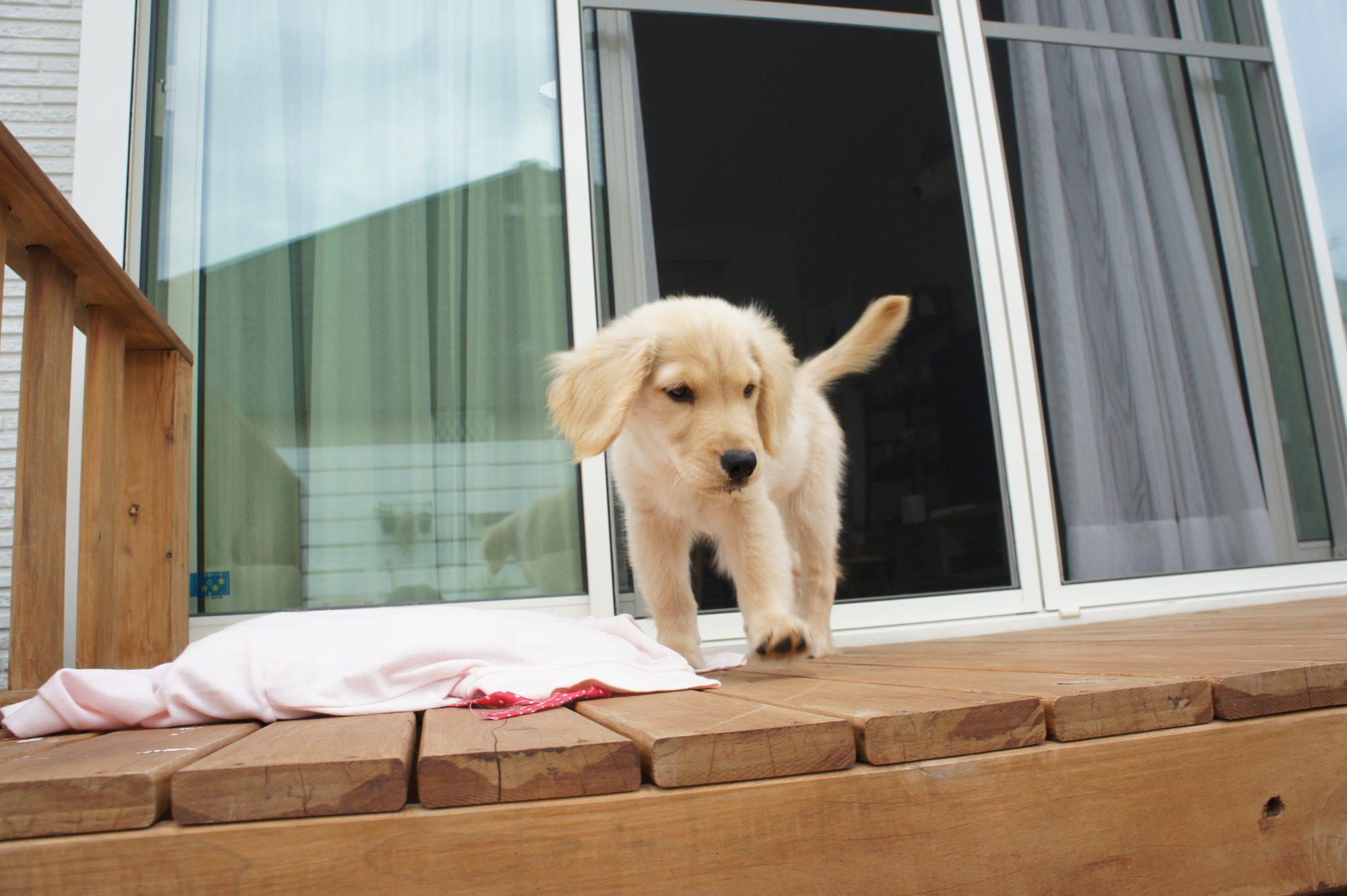 お庭でペットを飼うときに、気を付けることは?