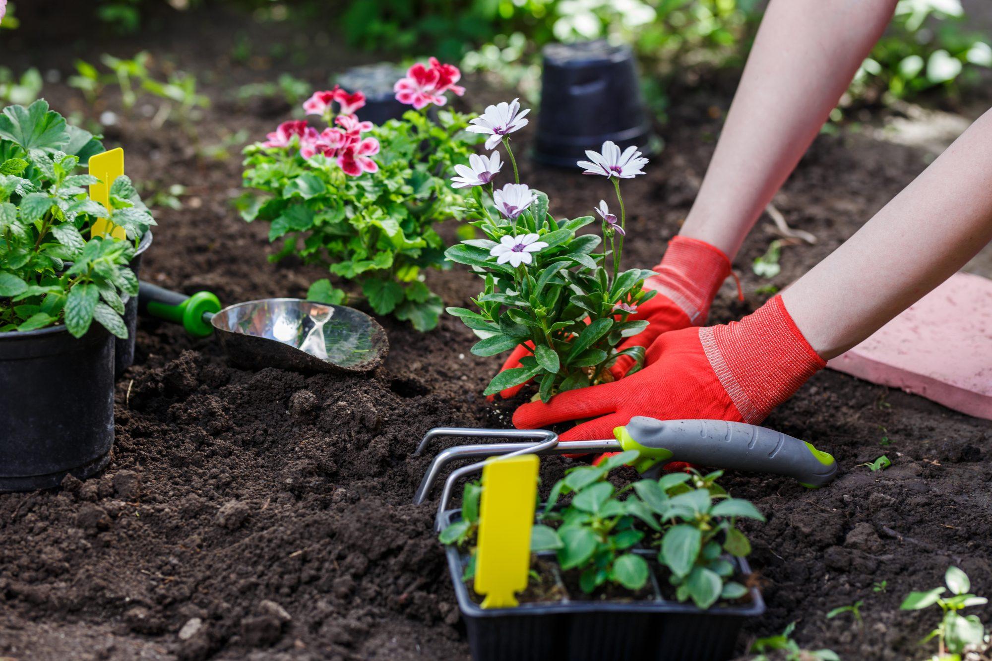 「庭のある暮らし」を楽しむ