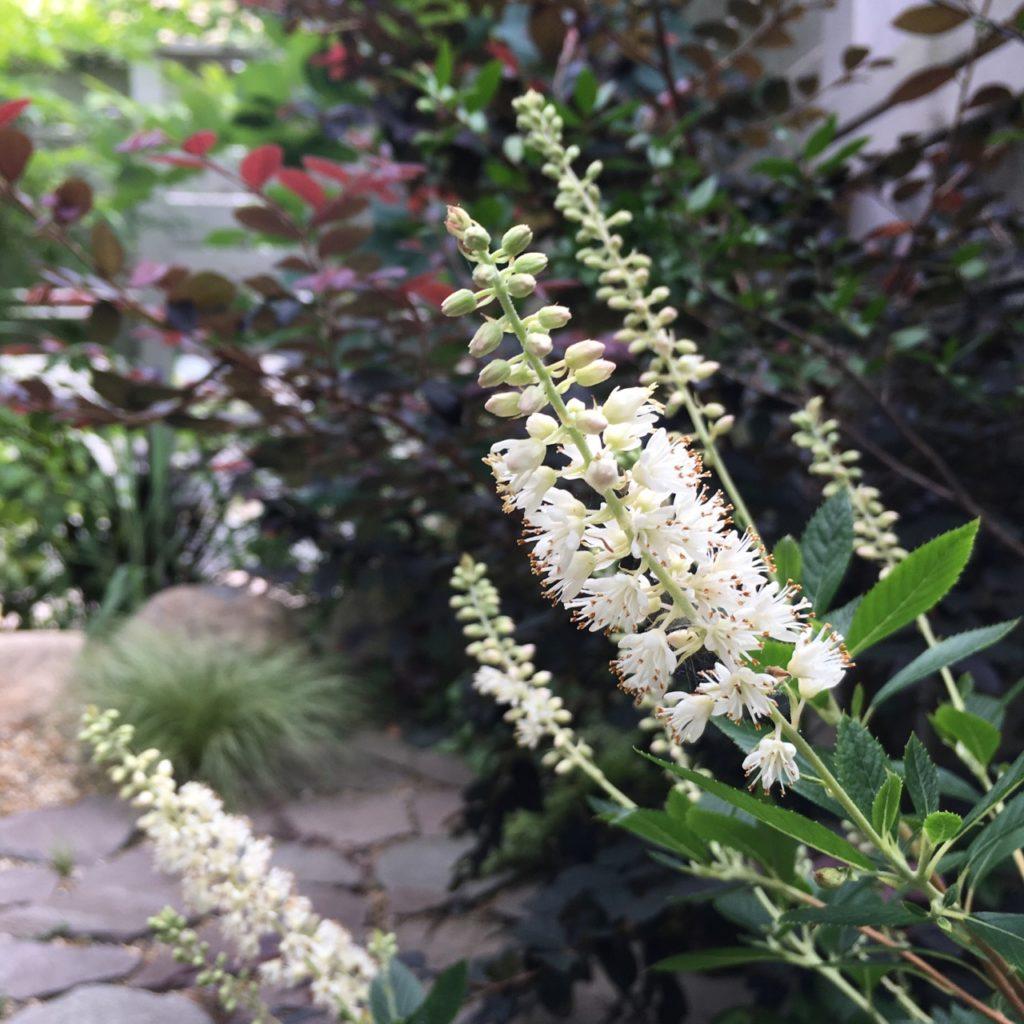 【建築設計士が考える】玄関まわりなどに合う3つの植物コーディネート術をご紹介