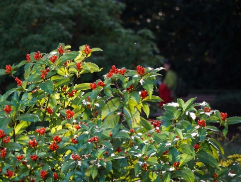 何を選ぶ?日陰の玄関周りを彩る、おススメの植物