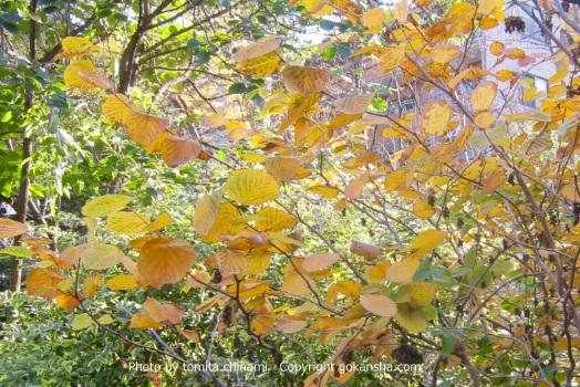 【エクステリア空間の専門家】秋と春の季節で、葉色の変化を楽しめる我が家に似合った植物はどれ?