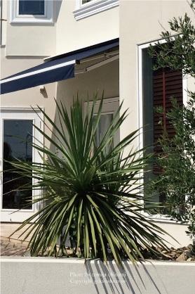 モダンでかっこいい雰囲気を演出する植物