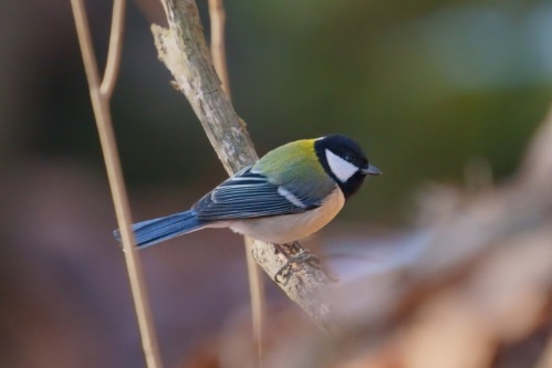 寒い季節でも庭先を楽しむ方法のひとつ、小鳥を呼んで心を癒したい
