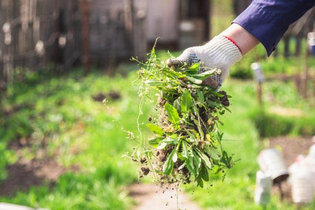 お手入れがラクで美しい庭にする!ウッドデッキや庭木の上手な選び方