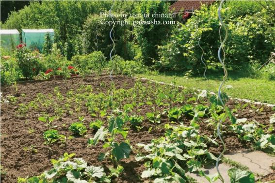 お庭で菜園を楽しみたい、始める時に決める大事な3つのこと。