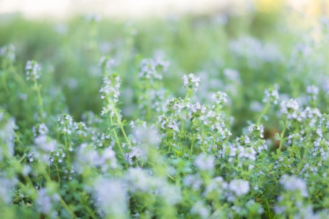 夏の体調を守る、自宅の庭でのハーブの育て方