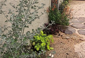 小さな動く庭