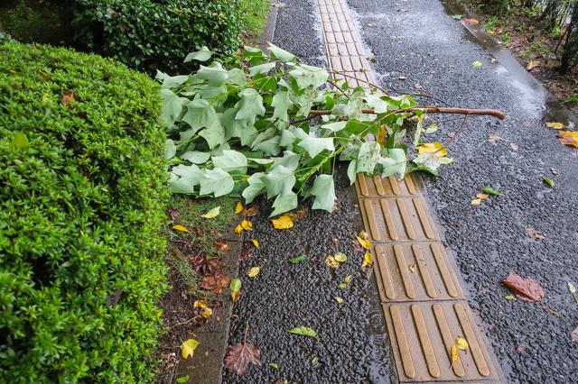 今年もまた、強い台風が来るかも!?今すぐできるカーポート防御策を教えます