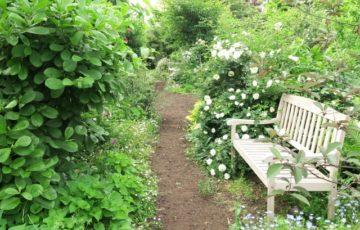 春のガーデニング、植物を選ぶ4つのステップ