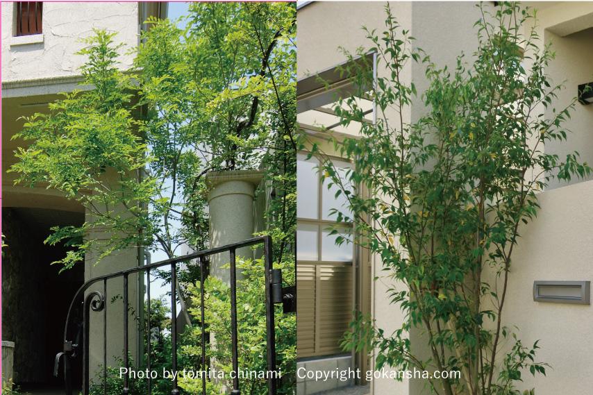 【エクステリア空間の専門家】シンボルツリー の選び方とおすすめの樹木のご紹介