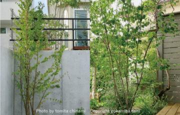 シンボルツリー の選び方とおすすめの樹木のご紹介