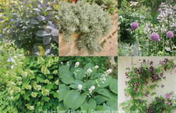 我が家に合う「フェンスと植物」のコーディネート提案