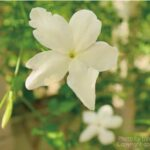 緑に囲まれ、目隠しや日陰・日差しをコントロールしてくれるおすすめの、つる性植物8選