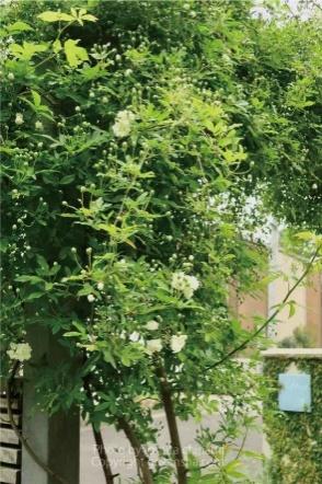 【エクステリア空間の専門家】緑に囲まれ、目隠しや日陰・日差しをコントロールしてくれるおすすめの、つる性植物8選