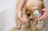 お散歩帰りの犬の泥んこ足!ウッドデッキや大型洗面台があれば、ラクラク足洗い